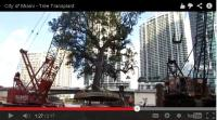 City of Miami - Tree Transplant - Video